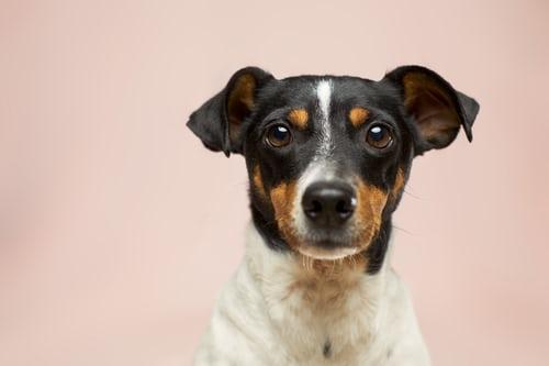 Honden maken gelukkig, laat uw hond ook gelukkig zijn!